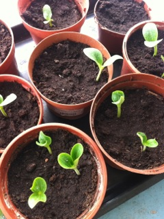 planteringar på Gården i Rone