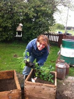 Ulrika Davidsson planterar på gården